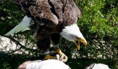 samuel l jackson eagle bird freedom do you speak it animal funny pics pictures pic picture image photo images photos lol