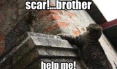 cat lolcat animal falling holding on scar brother help me lion king disney funny pics pictures pic picture image photo images photos lol