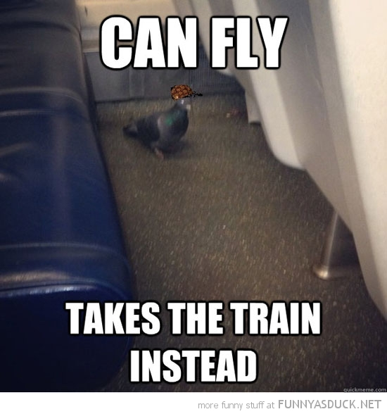 scumbag pigeon bird meme can fly takes train funny pics pictures pic picture image photo images photos lol