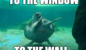 sea turtle tortoise animal ocean dancing to window wall funny pics pictures pic picture image photo images photos lol