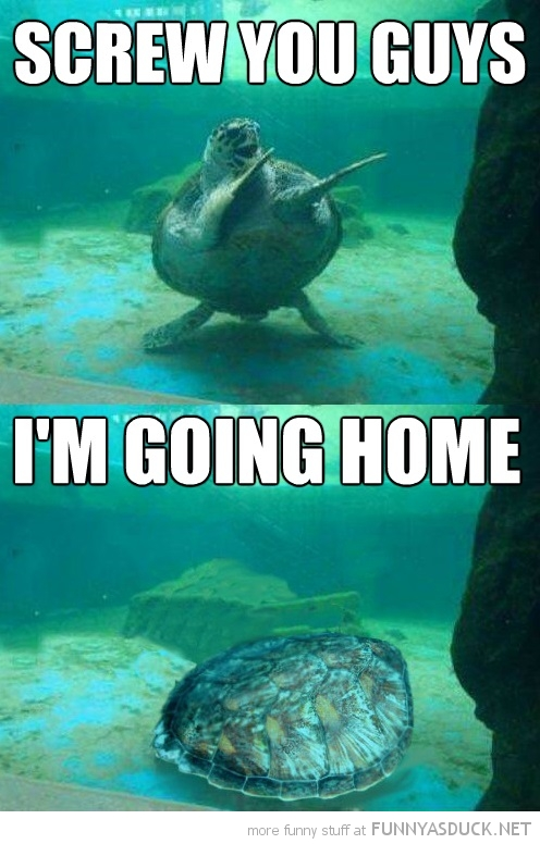 sea turtle tortoise animal screw you guys going home cartman south park funny pics pictures pic picture image photo images photos lol