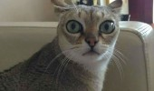 shocked surprised cat lolcat animal seen things never wish to see funny pics pictures pic picture image photo images photos lol