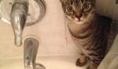 shocked surprised cat animal shower human tail on backwards funny pics pictures pic picture image photo images photos lol