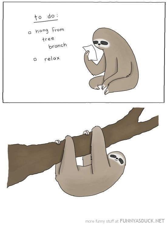 sloth to do list comic hang tree animal funny pics pictures pic picture image photo images photos lol