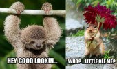 smooth sloth animal hey good looking squirrel flower who me funny pics pictures pic picture image photo images photos lol