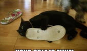 cat lolcat animal biting shoe sole soul is mine funny pics pictures pic picture image photo images photos lol