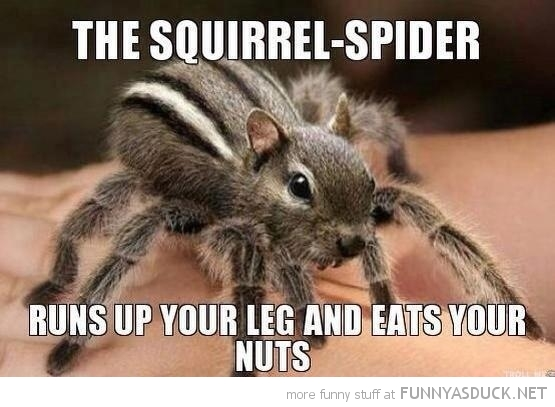 squirrel spider animal run up leg eat nuts  funny pics pictures pic picture image photo images photos lol