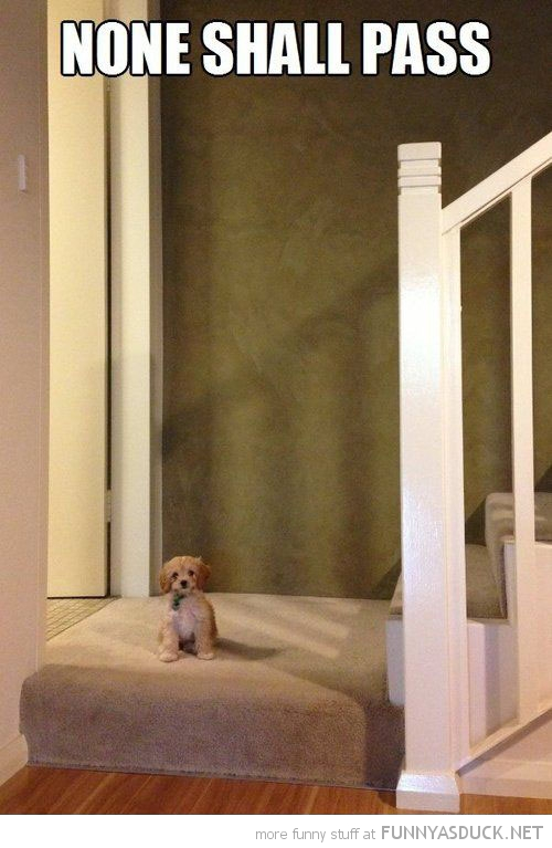 tiny dog puppy animal sitting door none shall pass guard funny pics pictures pic picture image photo images photos lol