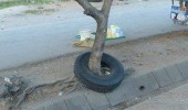 tire round tree someone please explain this shit funny pics pictures pic picture image photo images photos lol