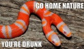 two headed snake animal go home nature drunk funny pics pictures pic picture image photo images photos lol