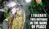 wet owl hose water angry animal bird tolerate this outrage name peace people funny pics pictures pic picture image photo images photos lol