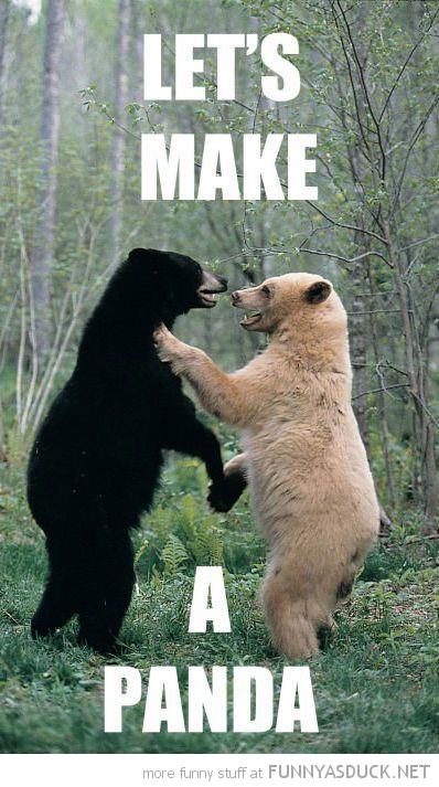 white black bear animal laughing lets make panda funny pics pictures pic picture image photo images photos lol