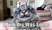 wide eyed cat lolcat animal dude bad catnip funny pics pictures pic picture image photo images photos lol
