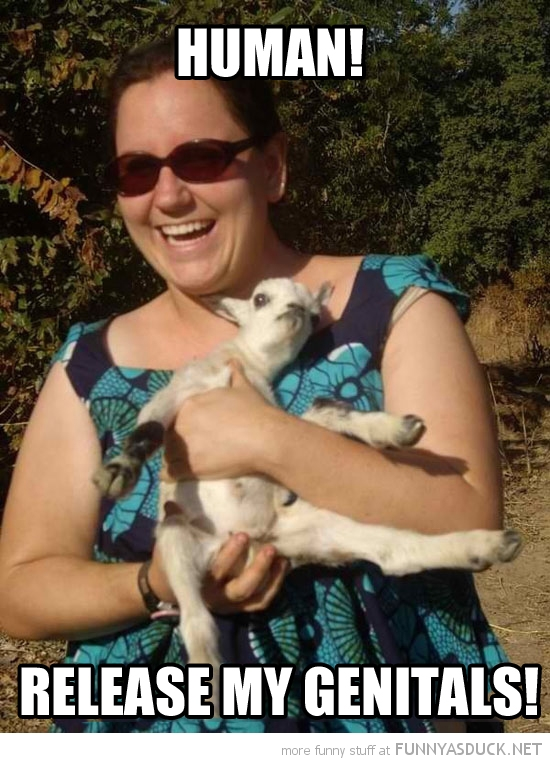 woman holding goat animal girl release my genitals human funny pics pictures pic picture image photo images photos lol