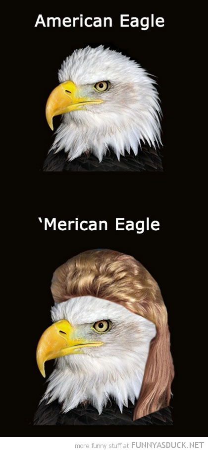 american 'merican bald eagle mullet animal redneck funny pics pictures pic picture image photo images photos lol