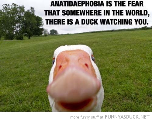 anatidaephobia fear duck watching you animal funny pics pictures pic picture image photo images photos lol