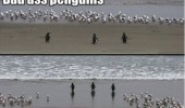 bad ass penguins walking beach birds animals funny pics pictures pic picture image photo images photos lol