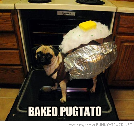 baked pugtato dog animal pug costume potato funny pics pictures pic picture image photo images photos lol
