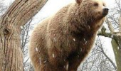bear animal standing tree branch lol i'm a bird funny pics pictures pic picture image photo images photos lol