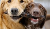 best friends stick together dogs animals happy fetch funny pics pictures pic picture image photo images photos lol