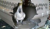 bird animal pecked through cage no prison can hold me funny pics pictures pic picture image photo images photos lol