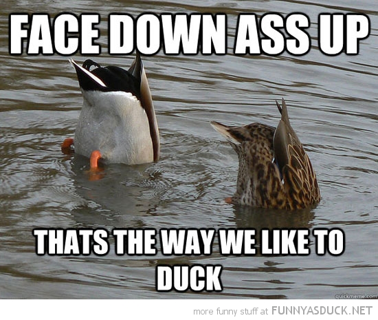birds animals heads water face down ass up duck funny pics pictures pic picture image photo images photos lol