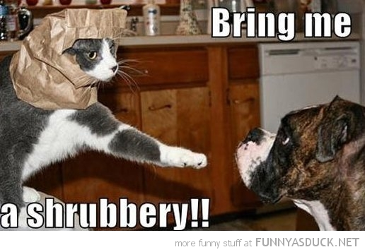 bring me shrubbery monty python holy grail cat lolcat animal bag head dog funny pics pictures pic picture image photo images photos lol