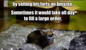 bubble wrap cat lolcat animal sell farts amazon funny pics pictures pic picture image photo images photos lol