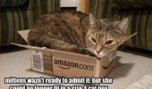 cat lolcat animal sitting box no longer fit funny pics pictures pic picture image photo images photos lol