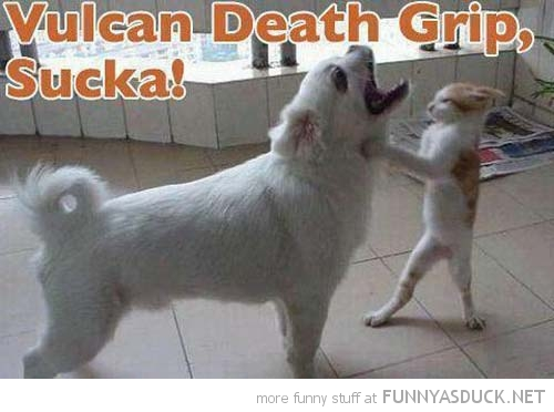 cat dog fighting vulcan death grip spock star trek animal funny pics pictures pic picture image photo images photos lol