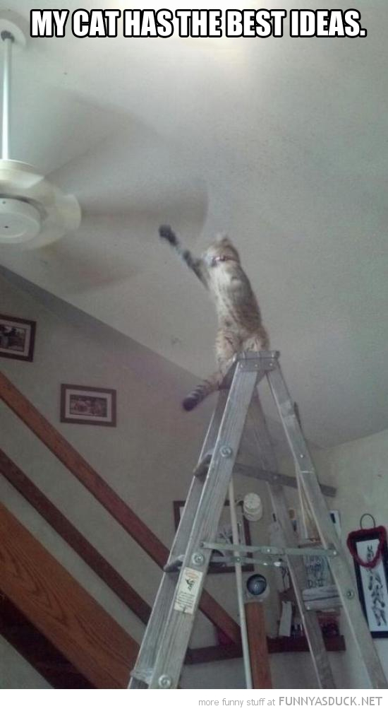 cat lolcat animal has great ideas ladder paw reaching ceiling fan funny pics pictures pic picture image photo images photos lol