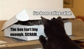 cats lolcats animals fighting over cardboard box funny pics pictures pic picture image photo images photos lol