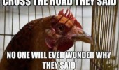 chicken hen bird animal thinking cross the road they said never wonder why funny pics pictures pic picture image photo images photos lol