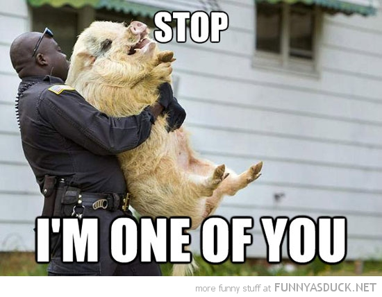 cop police holding pig animal stop one of you funny pics pictures pic picture image photo images photos lol
