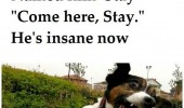 crazy dog animal named him stay he's insane now funny pics pictures pic picture image photo images photos lol
