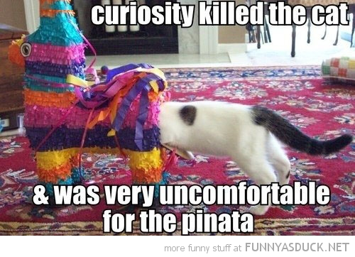 curiosity killed cat lolcat animal head in pinata funny pics pictures pic picture image photo images photos lol