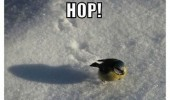 cute bird animal snow pay attention hop see that funny pics pictures pic picture image photo images photos lol