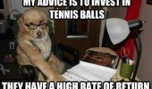 financial adviser dog animal invest in tennis balls glasses funny pics pictures pic picture image photo images photos lol