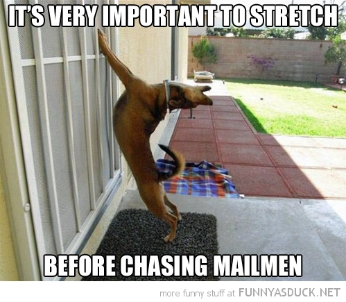 dog animal paws wall stretch before chase milkman funny pics pictures pic picture image photo images photos lol