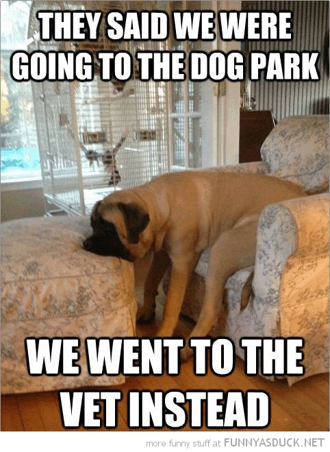 sad depressed dog animal problems said go park went vet funny pics pictures pic picture image photo images photos lol