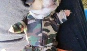 dog puppy animal sleeping army costume outfit deal with cat tomorrow nap funny pics pictures pic picture image photo images photos lol