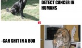 dogs trained smell cancer cats shit box animals funny pics pictures pic picture image photo images photos lol