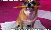 done math dog animal glasses pencil can't afford cat funny pics pictures pic picture image photo images photos lol