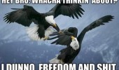 eagles birds animals playing thinking about freedom and shit usa america funny pics pictures pic picture image photo images photos lol