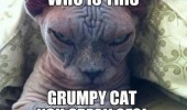 evil ugly cat lolcat animal who is grumpy funny pics pictures pic picture image photo images photos lol