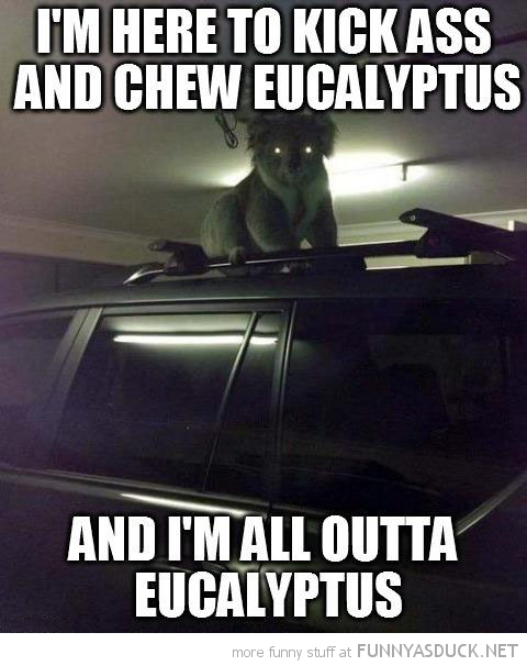 evil koala bear glowing eyes animal car roof kick ass and eat eucalyptus funny pics pictures pic picture image photo images photos lol