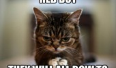 evil plan world domination cat lolcat animal caught red dot all bow to me funny pics pictures pic picture image photo images photos lol