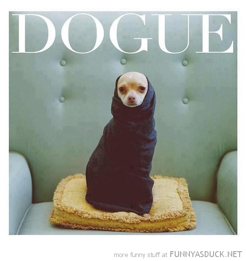 fashion dog animal sweater jumper dogue vogue magazine funny pics pictures pic picture image photo images photos lol