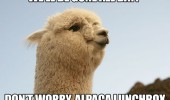gone all do alpaca lunchbox animal pun funny pics pictures pic picture image photo images photos lol