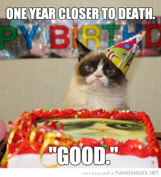 grumpy angry cat lolcat animal birthday party hat one year closer death good funny pics pictures pic picture image photo images photos lol